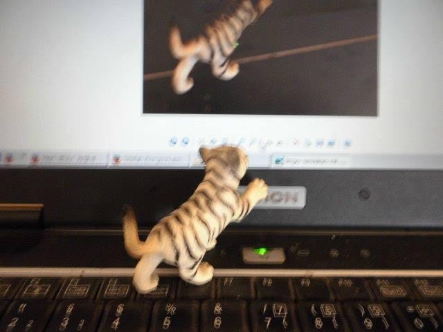 kleine-weisse-tiger-cameratechnik